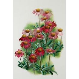 Вышитая шелковыми нитями картина ««Розовые ромашки»»