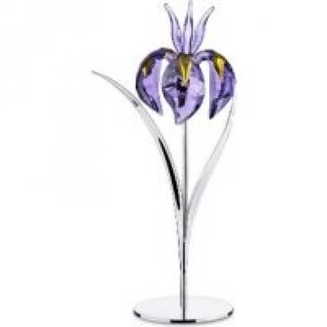 Цветок Damboa, Blue Violet