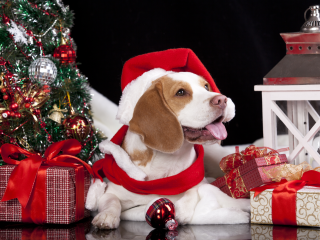 Купить подарок на новый год 2018 собака